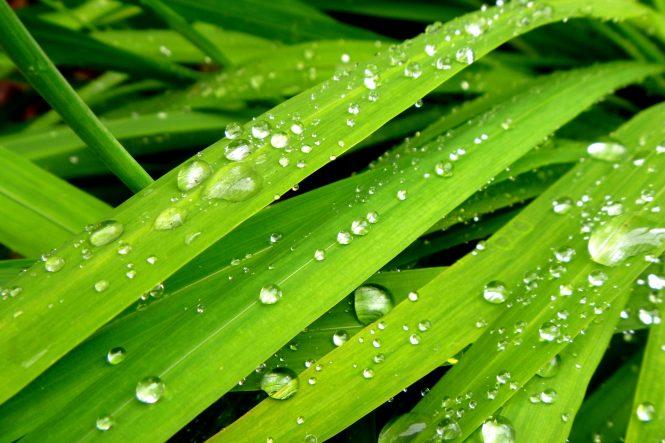 Rain on grass leaves