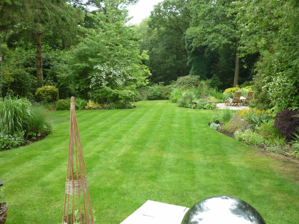 Lawn in an open garden.