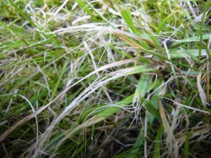 Ripped grass from trying to mow your lawn when it is wet