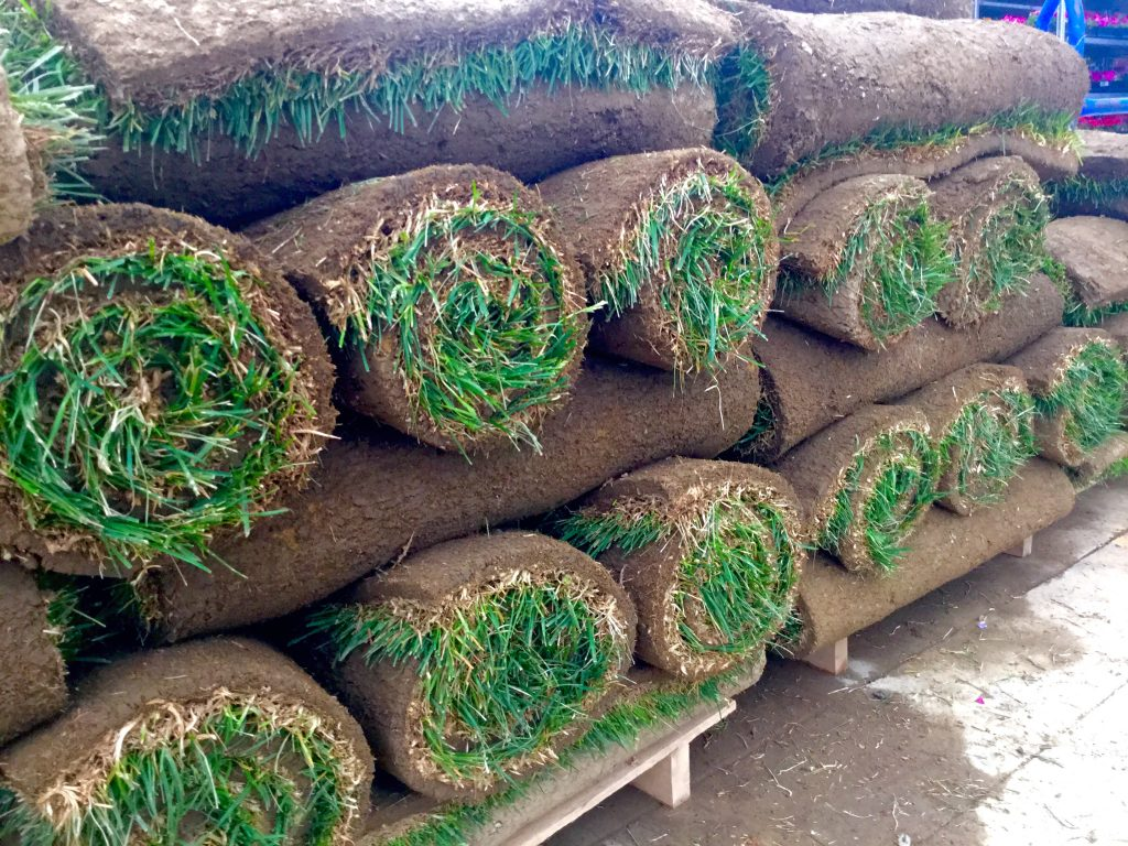 Rolls of turf on a pallet