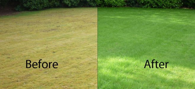 Scarification Before and After