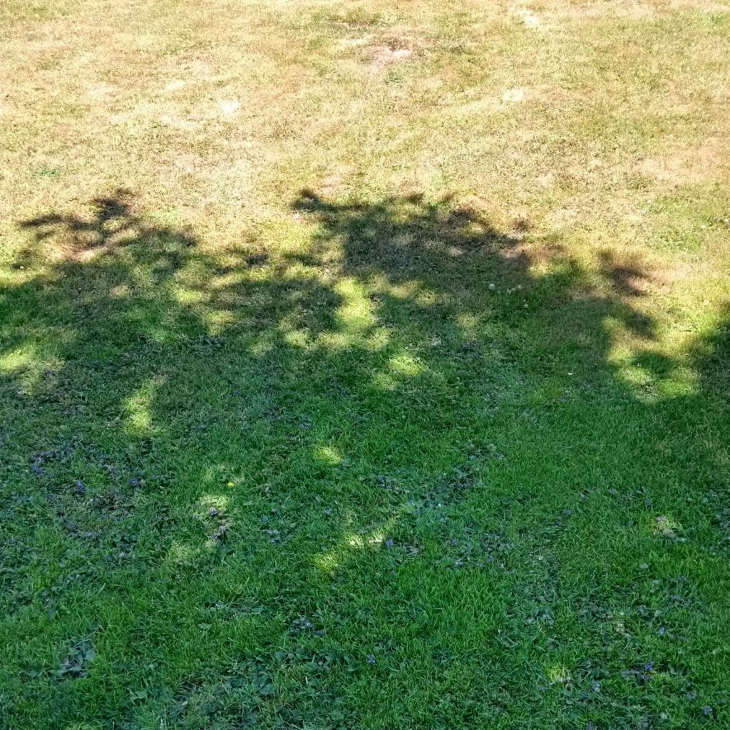 Shaded and sunny lawn