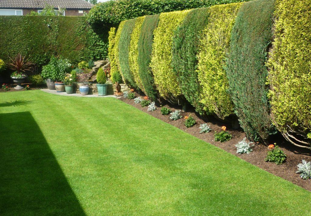 Small garden lawn in Budleigh Salterton