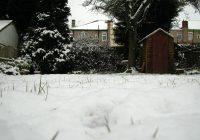 Snow on a lawn