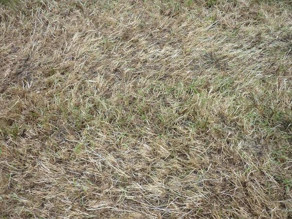 Striped grass close up