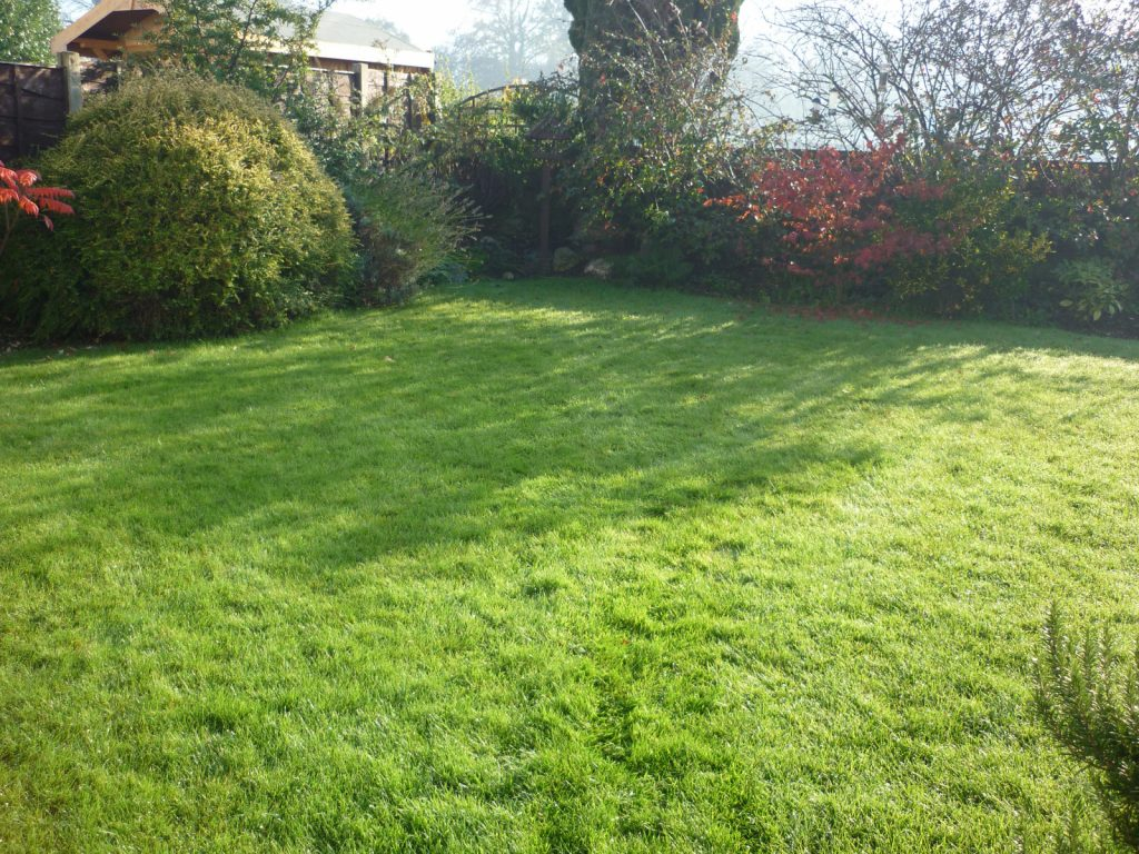 Thick lawn in the autumn