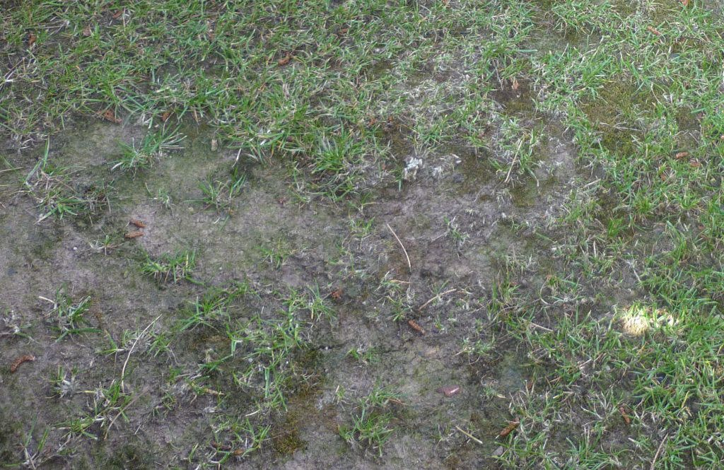 A thin, compacted lawn