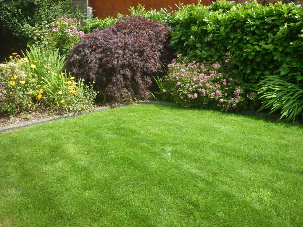 Turf on front lawn