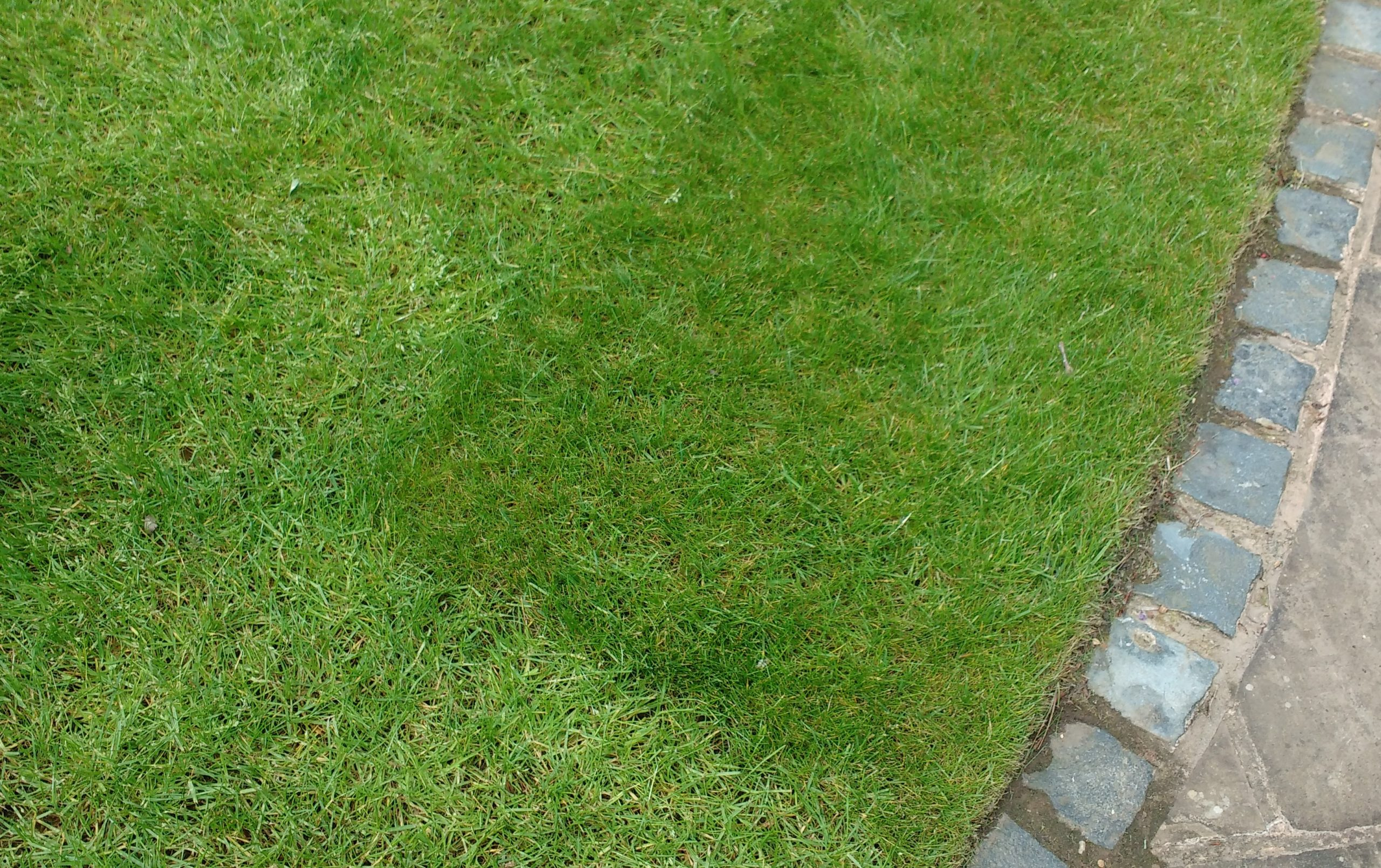 Should you seeed or turf your new lawn? Turf can lead to two different types of grass in a turf lawn