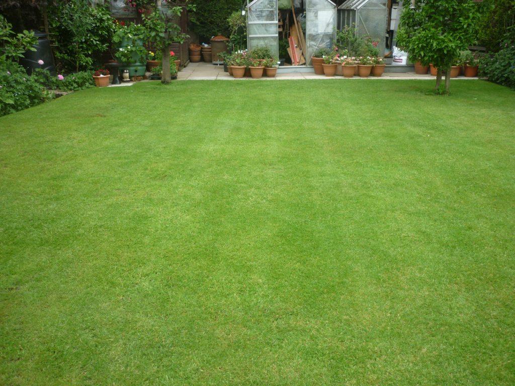 A weedy lawn transformed