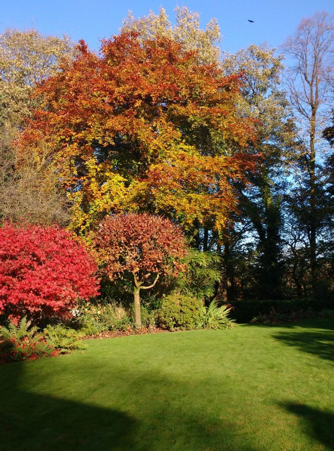 A lovely lawn and garden in the autumn