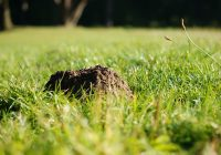 Molehill in some grass