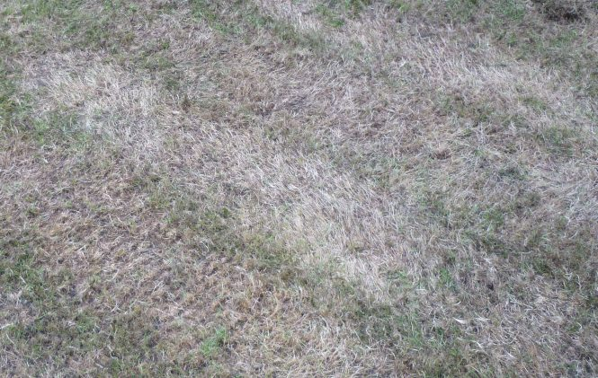 Grass leaning over from mowing