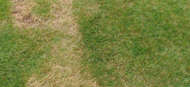 A lawn mowing scar