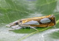 A white moth on a leaf.
