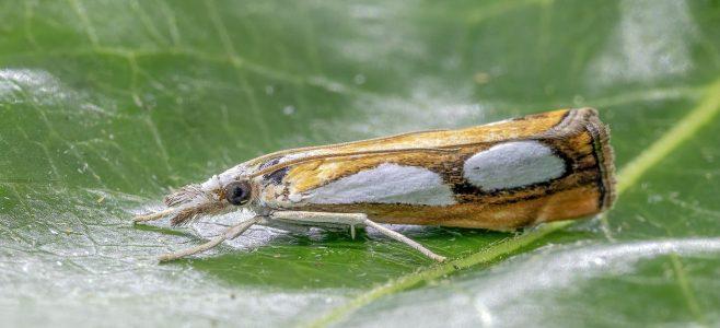 A white moth on a leaf.