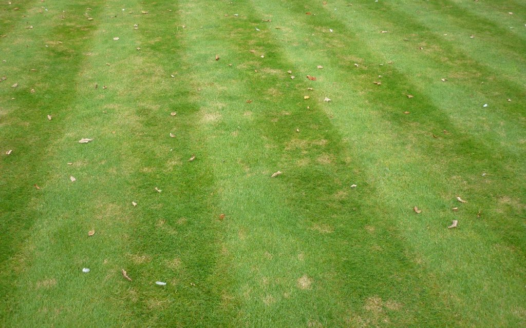 A lawn infected with fungal diseases.