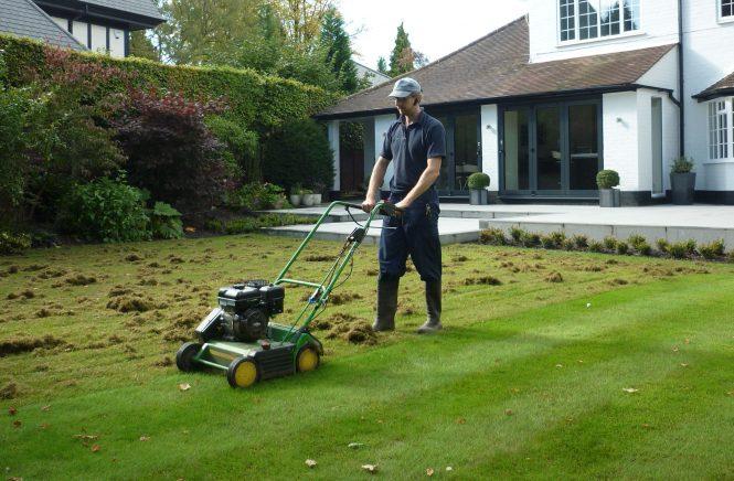 The Lawn Man scarifying a lawn
