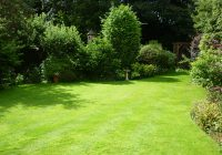 4 tips for spring lawn care